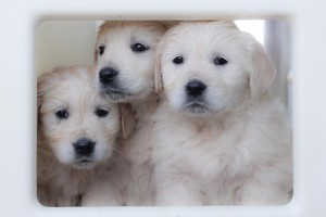 Puppy Cuteness-003 (Copy)