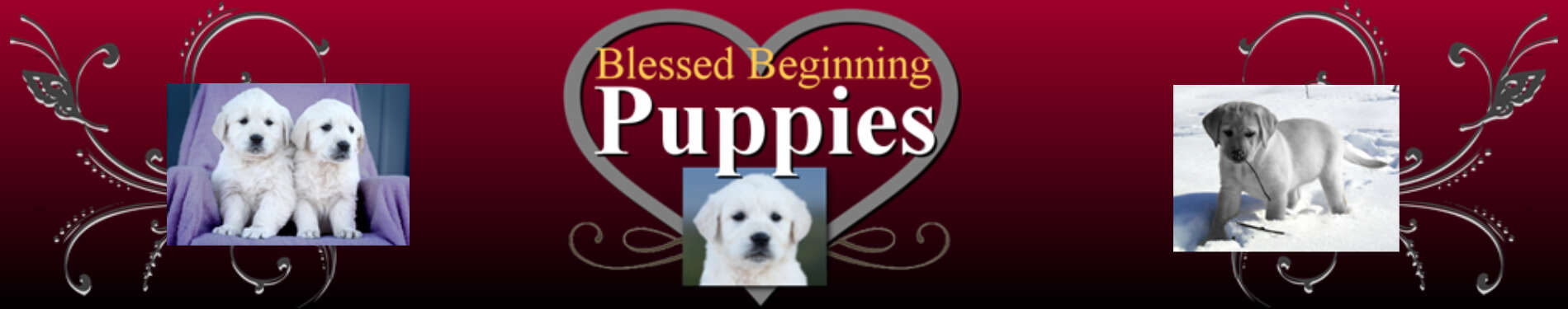 BLESSED BEGINNING PUPPIES